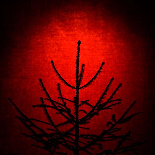 julgran-studio-investering-träd