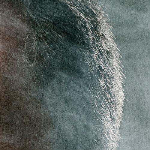 smoke-portrait-beard-ringflash-profoto